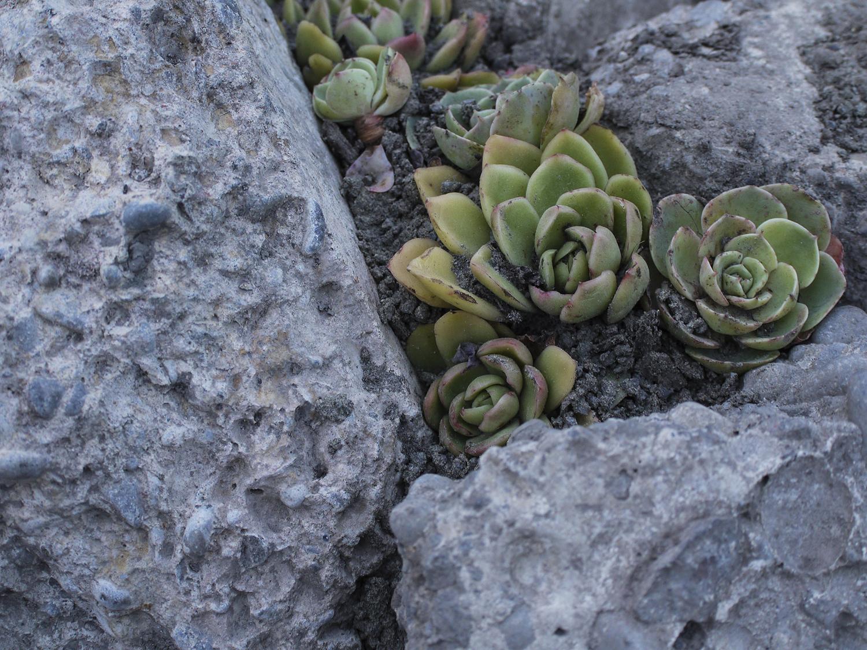 succulent_4.jpg
