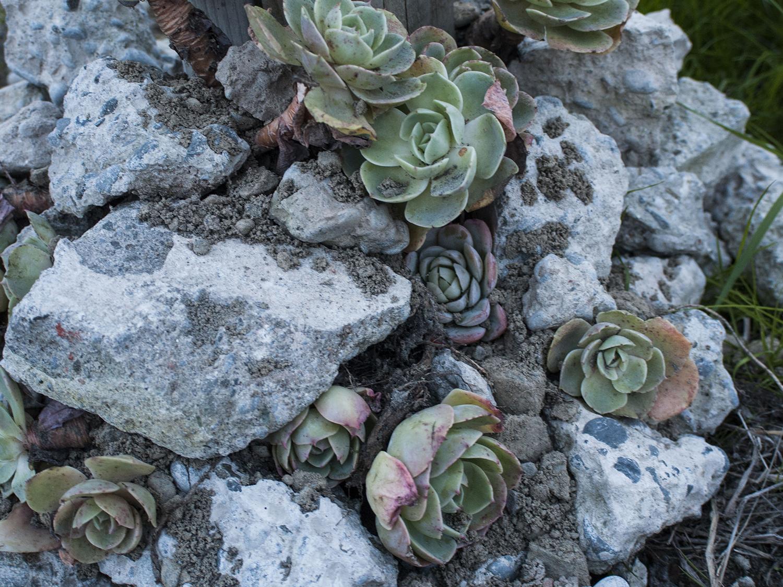 succulent_7.jpg
