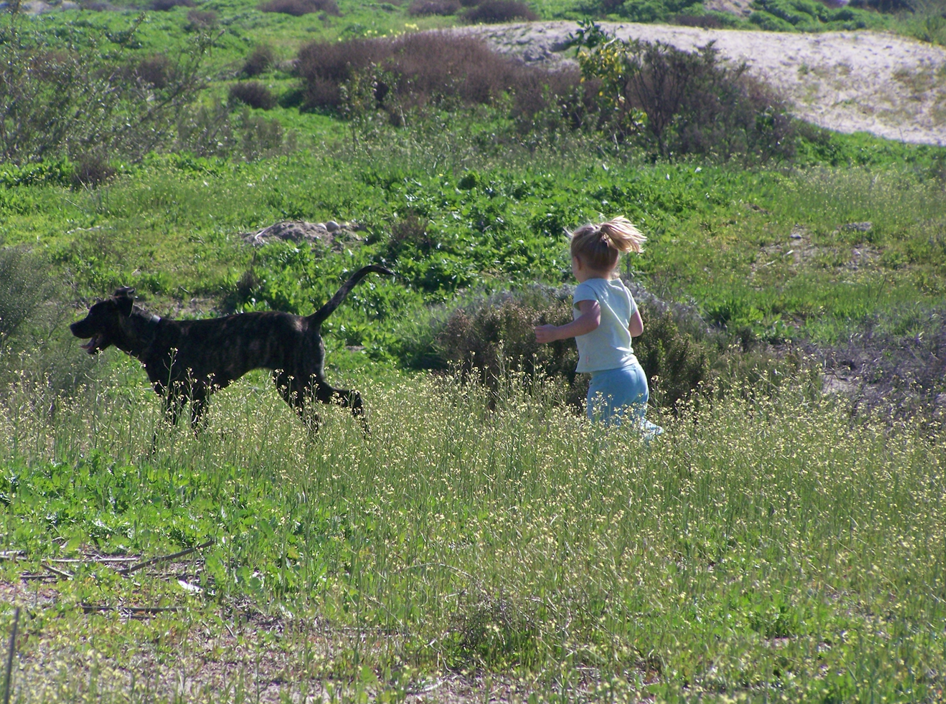 My daughter (age 3) and dog on one of our many adventures in San Diego, CA.
