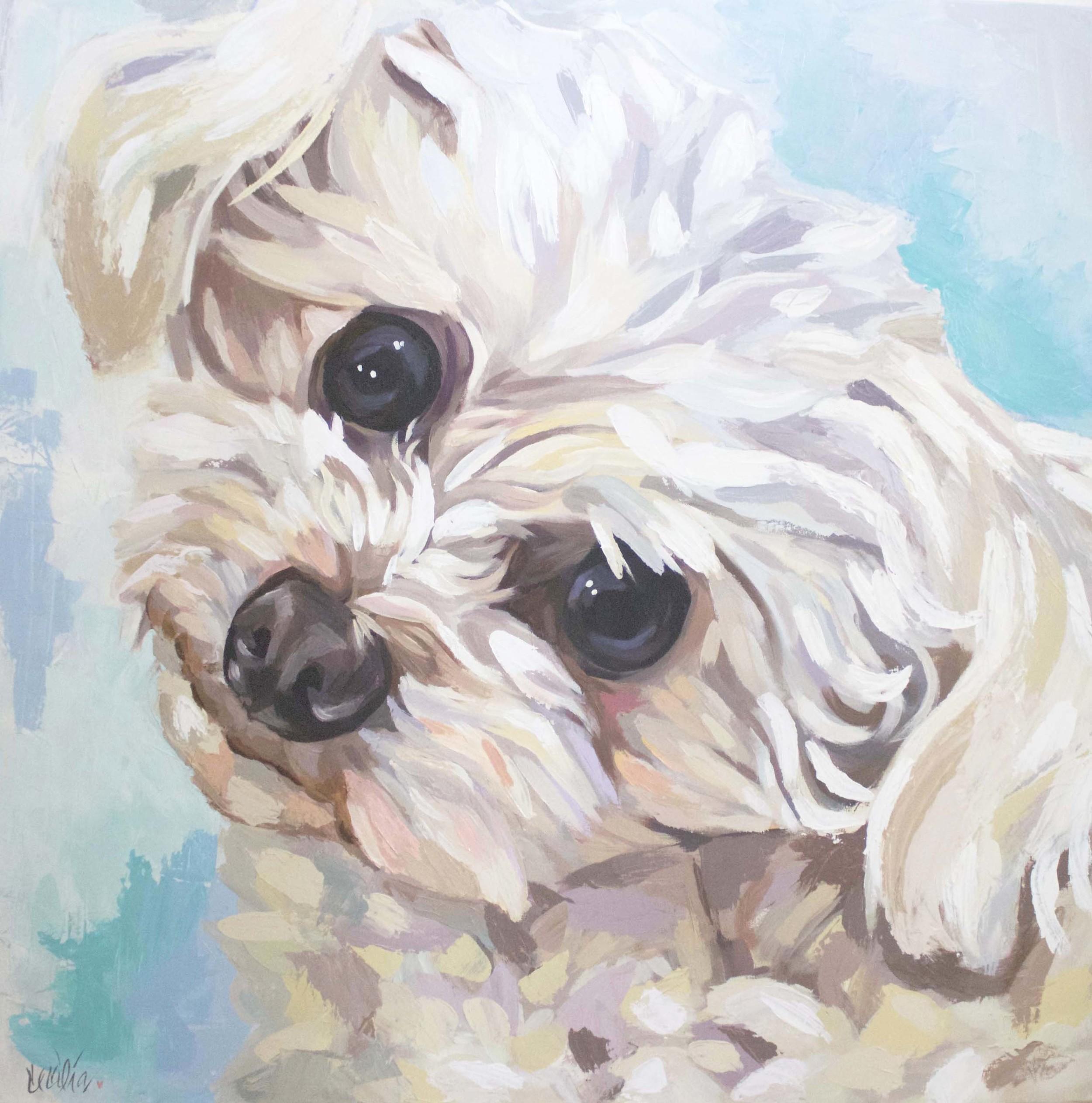 Robbie-toy poodle 36x36