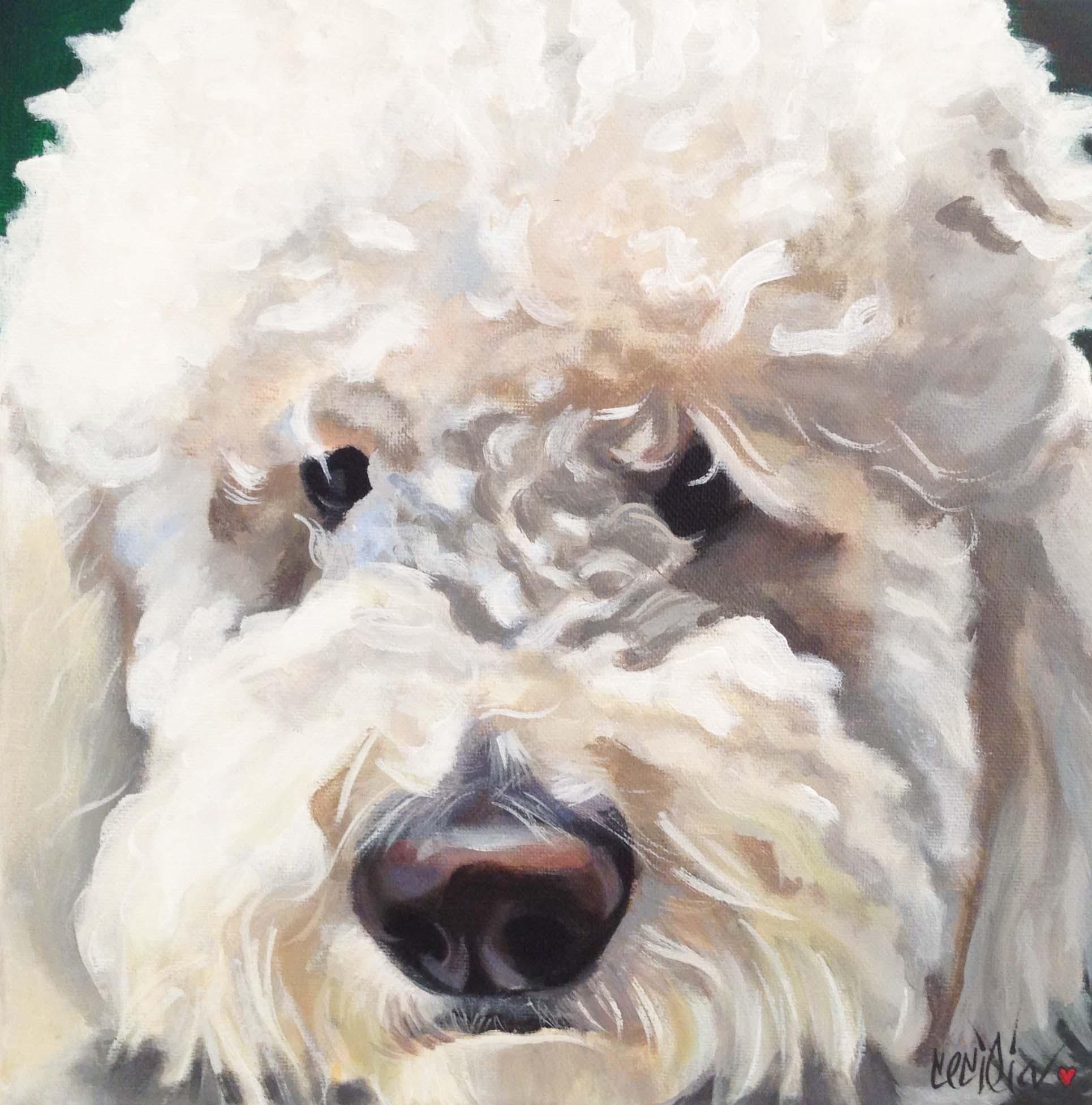 jacoby- lab/poodle mix 12x12