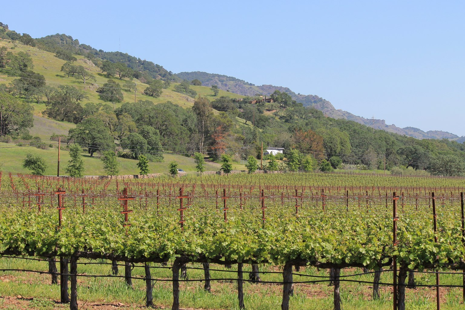 Paraduxx Vineyard Napa Winery