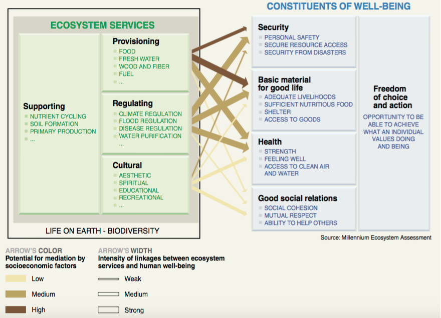 Linkages between ecosystem services and human well-being and potential for mediation by socioeconomic factors. Source: Millennium Ecosystem Assessment, 2005