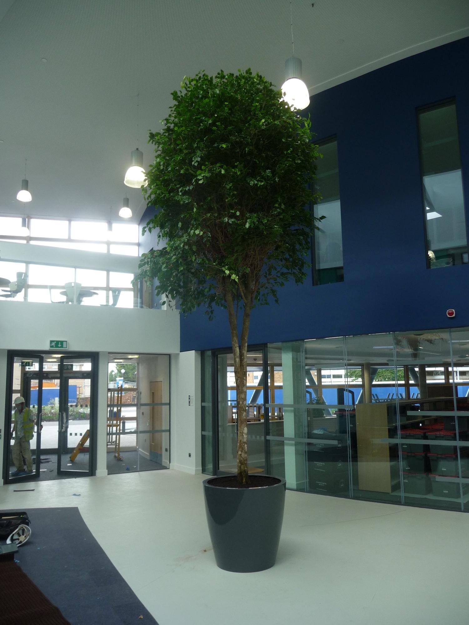 nailsea-school-plantcare-interior-plants-trees-bristol-cardiff-image-1