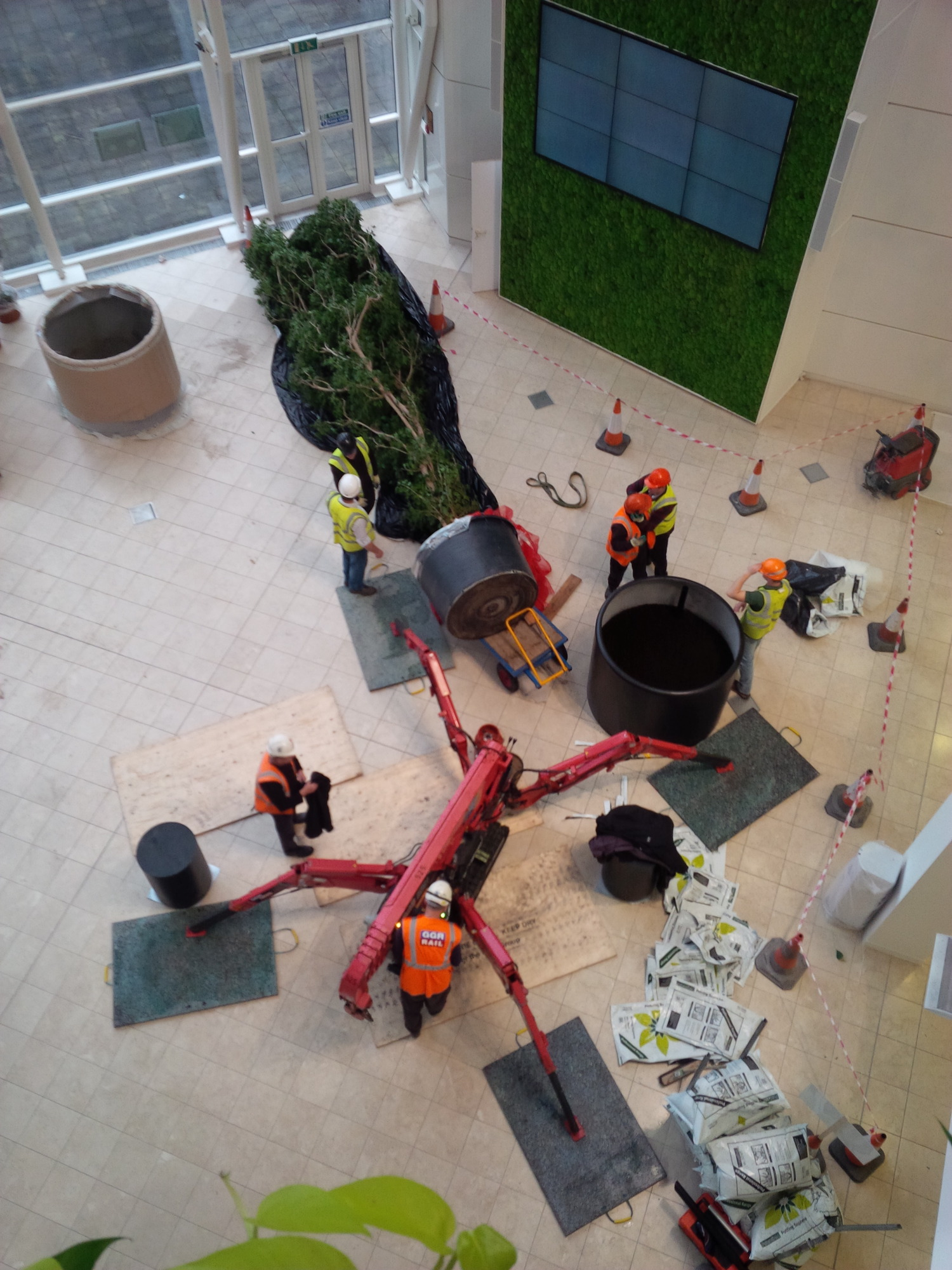 ovo-energy-plantcare-interior-plants-office-eco-friendly-trees-bristol-cardiff-image-2