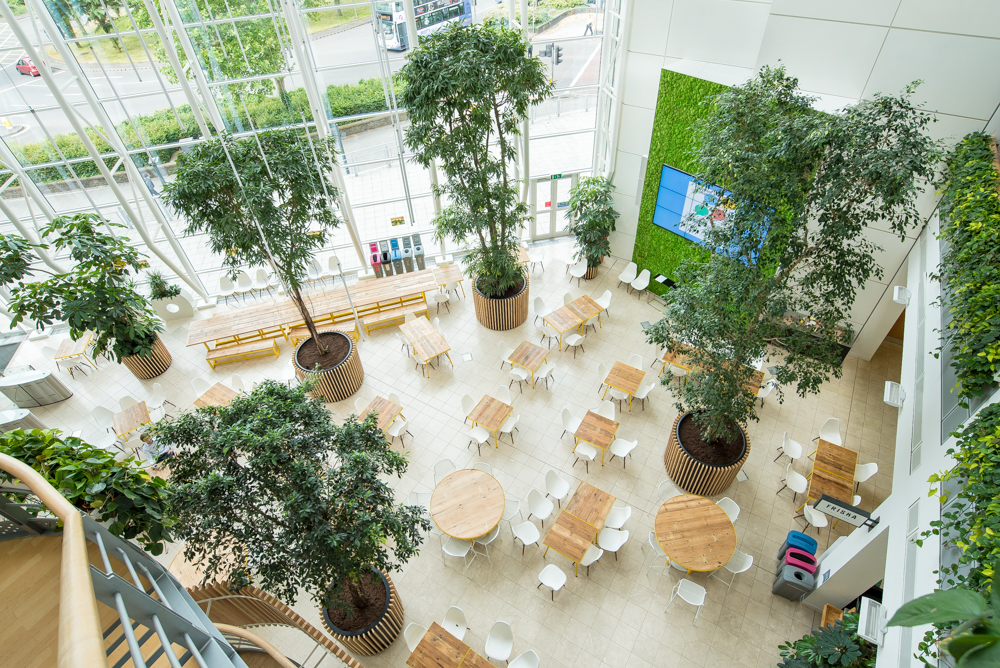 ovo-energy-plantcare-interior-plants-office-eco-friendly-trees-bristol-cardiff-image-3