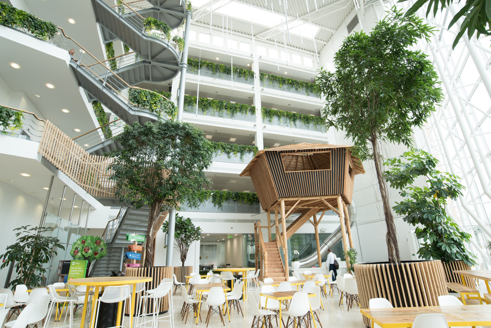 ovo-energy-plantcare-interior-plants-office-eco-friendly-trees-bristol-cardiff-image-7