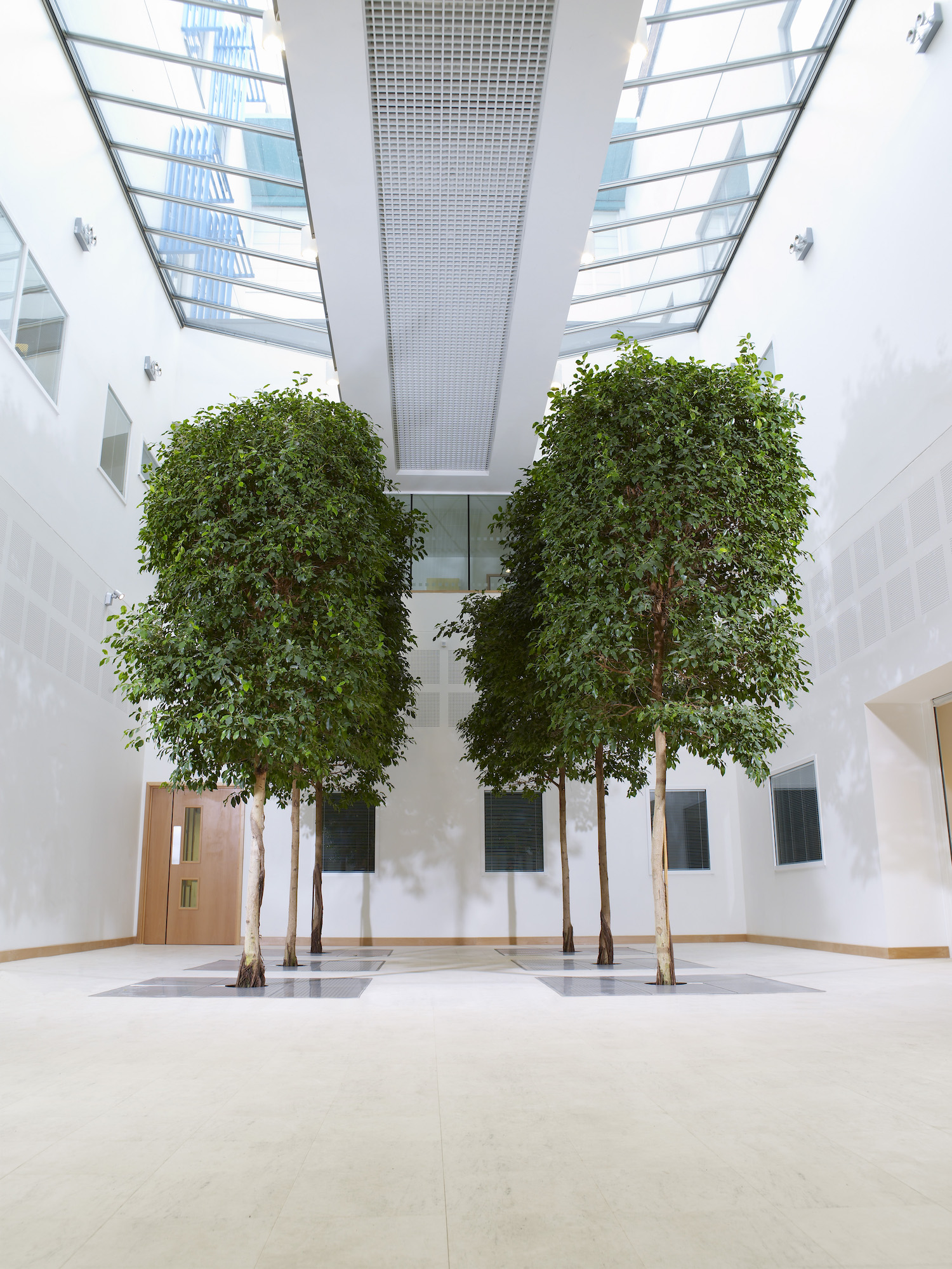 bristol-royal-infirmary-hospital-plantcare-interior-plants-trees-bristol-image-1