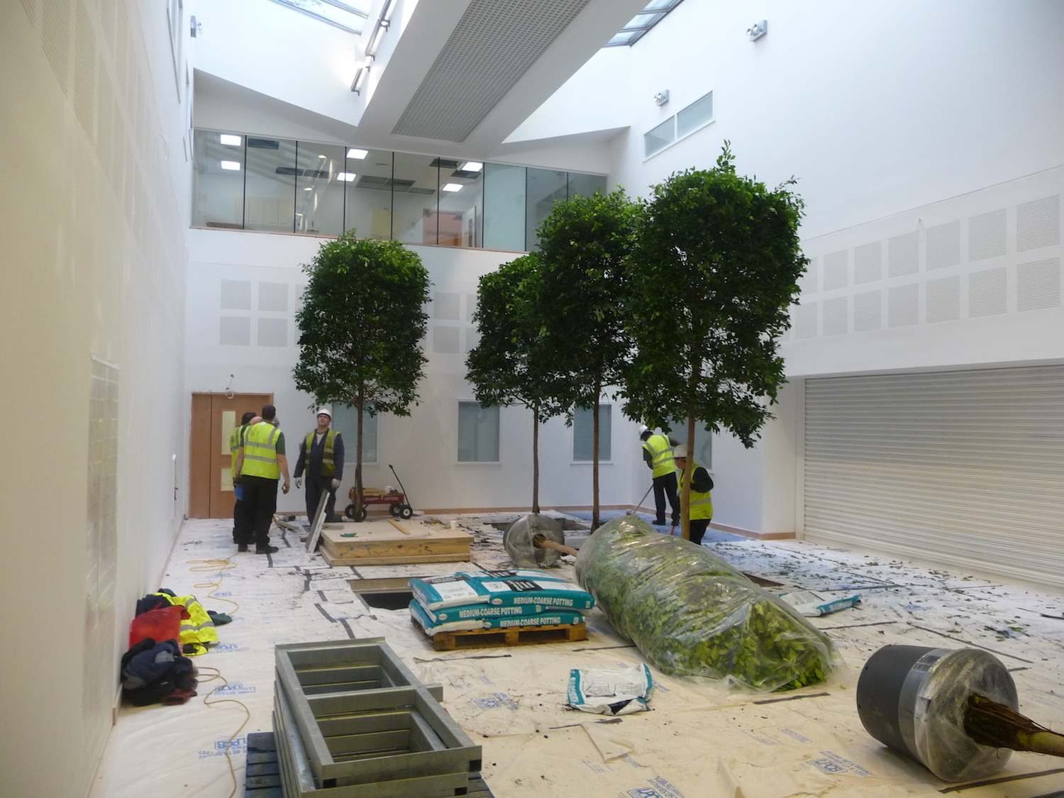 bristol-royal-infirmary-hospital-plantcare-interior-plants-trees-bristol-image-3