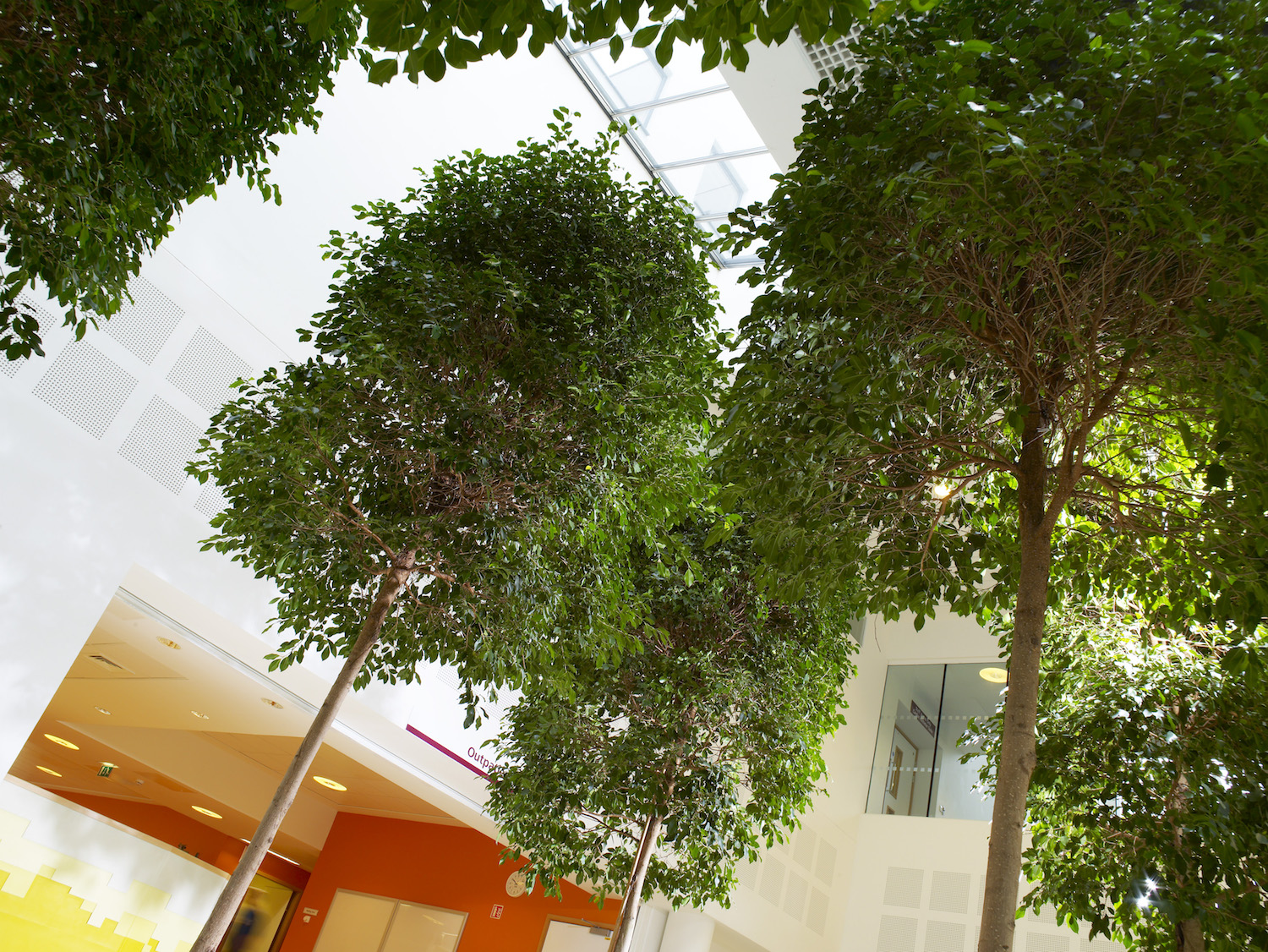 bristol-royal-infirmary-hospital-plantcare-interior-plants-trees-bristol-image-6