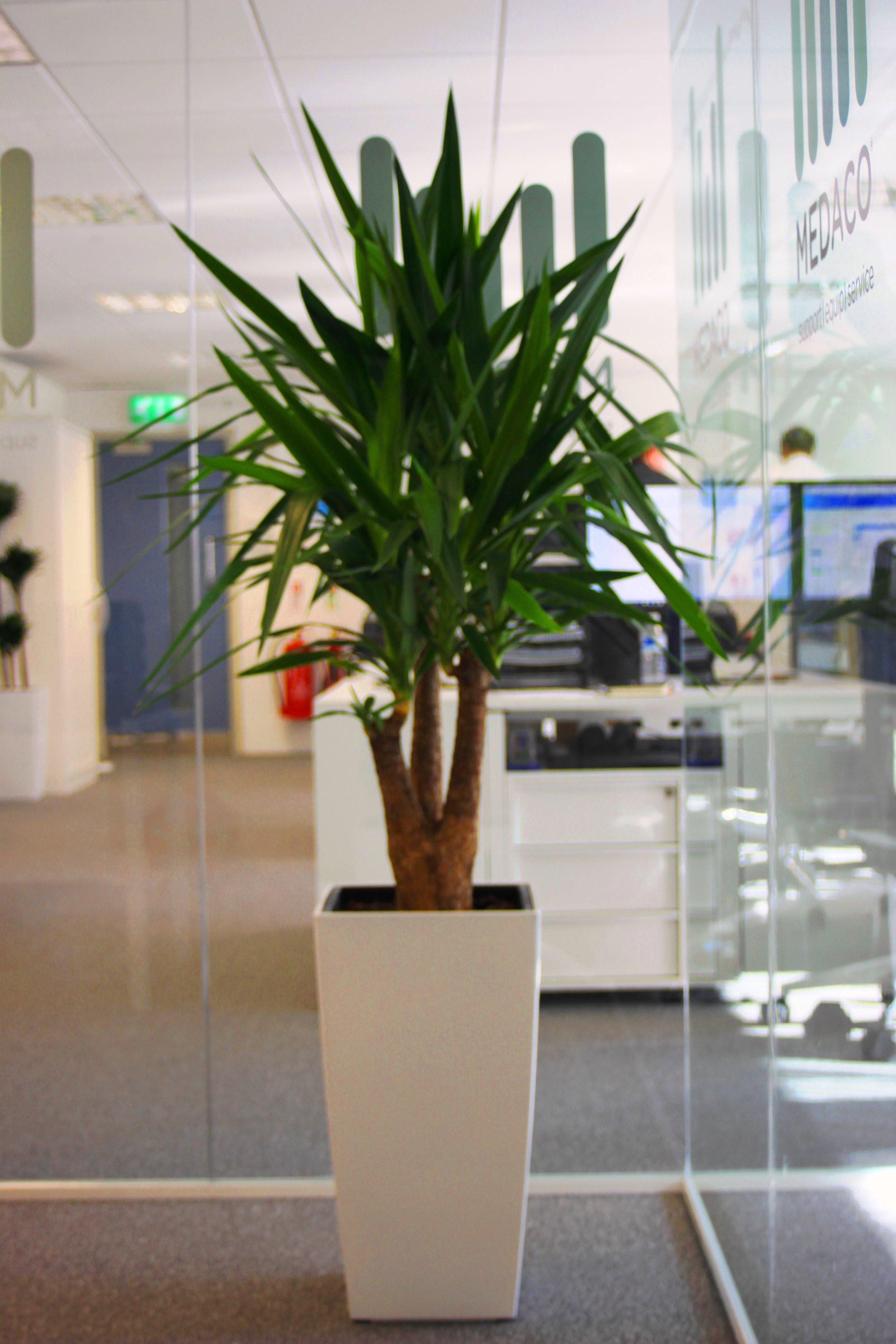 medaco-plantcare-interior-plants-trees-bristol-image-2