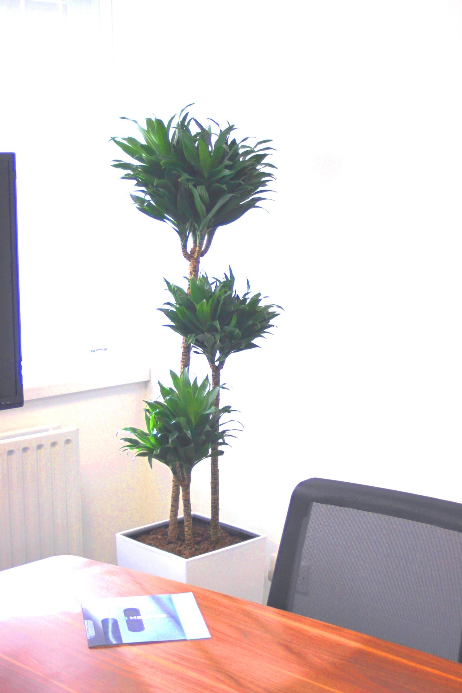 medaco-plantcare-interior-plants-trees-bristol-image-4