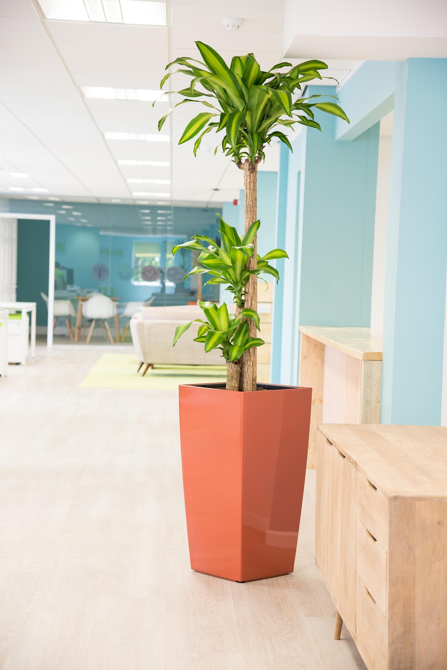 forrestbrown-plantcare-interior-plants-trees-bristol-image-1
