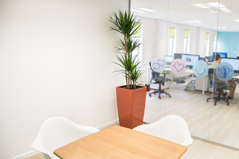 forrestbrown-plantcare-interior-plants-trees-bristol-image-3