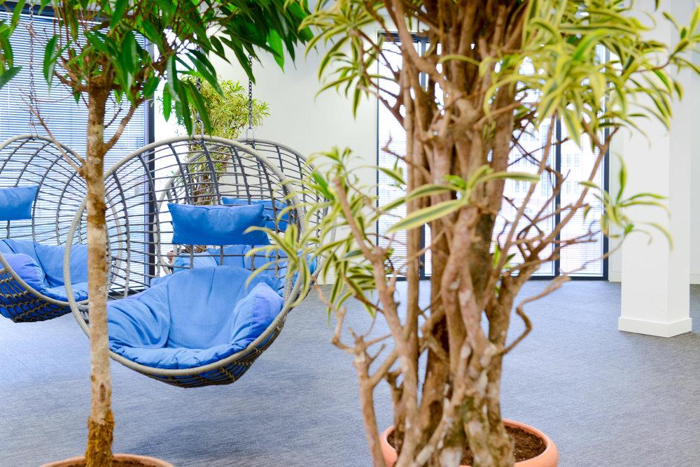ovo-energy-2-plantcare-interior-plants-office-eco-friendly-trees-bristol-cardiff-image-1