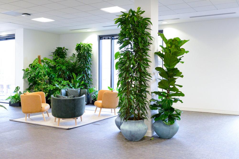 ovo-energy-2-plantcare-interior-plants-office-eco-friendly-trees-bristol-cardiff-image-4
