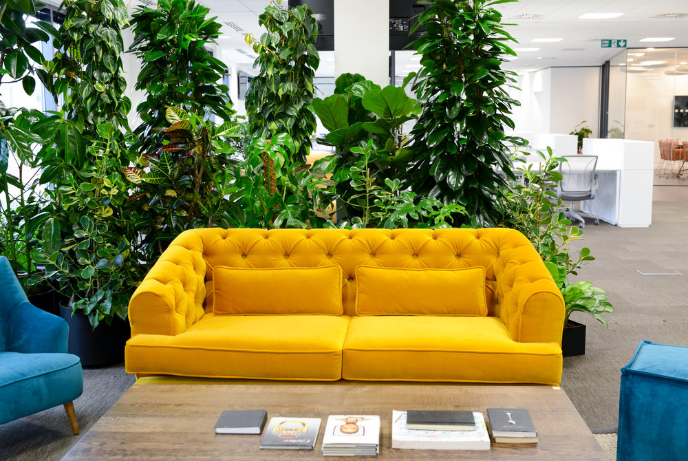 ovo-energy-2-plantcare-interior-plants-office-eco-friendly-trees-bristol-cardiff-image-2