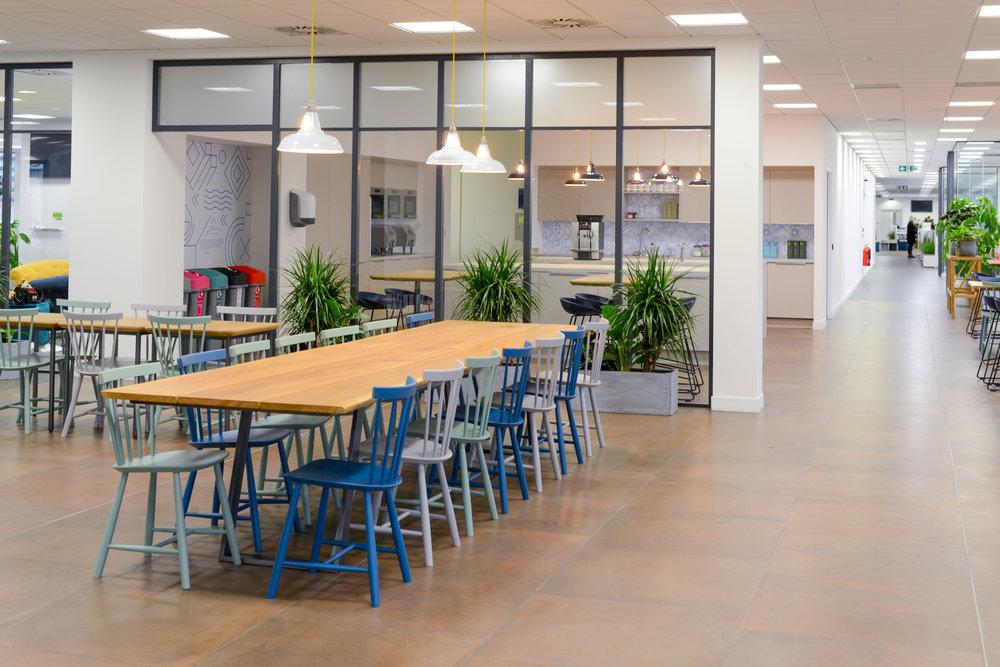 ovo-energy-2-plantcare-interior-plants-office-eco-friendly-trees-bristol-cardiff-image-8