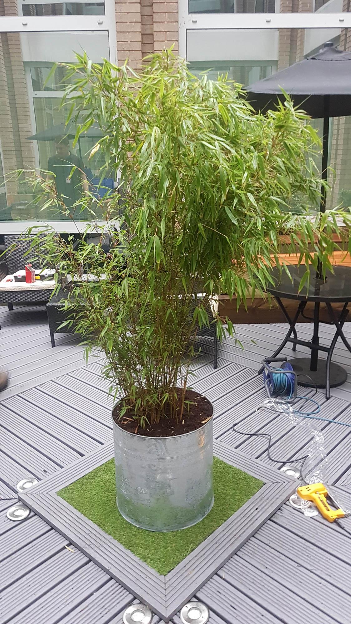 bristol-computer-society-exterior-plant-displays-plantcare-image-2