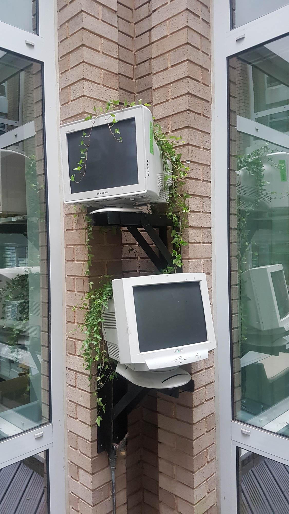 20170711_150321.jpbristol-computer-society-exterior-plant-displays-plantcare-image-3