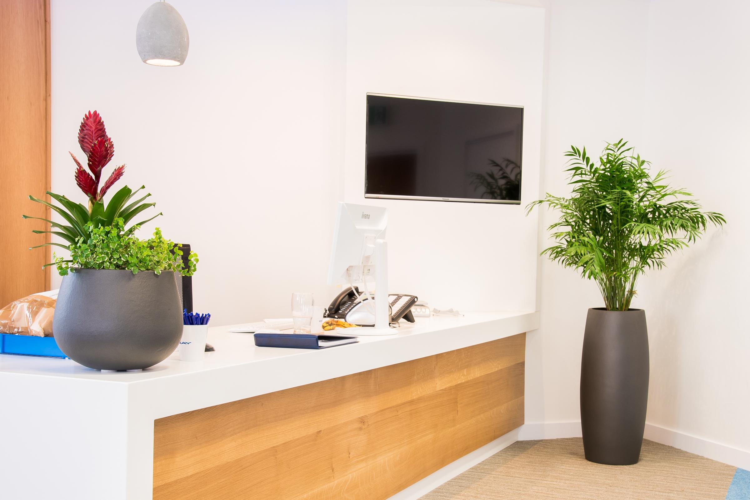 office-plants-rent-maintain-plants.jpg