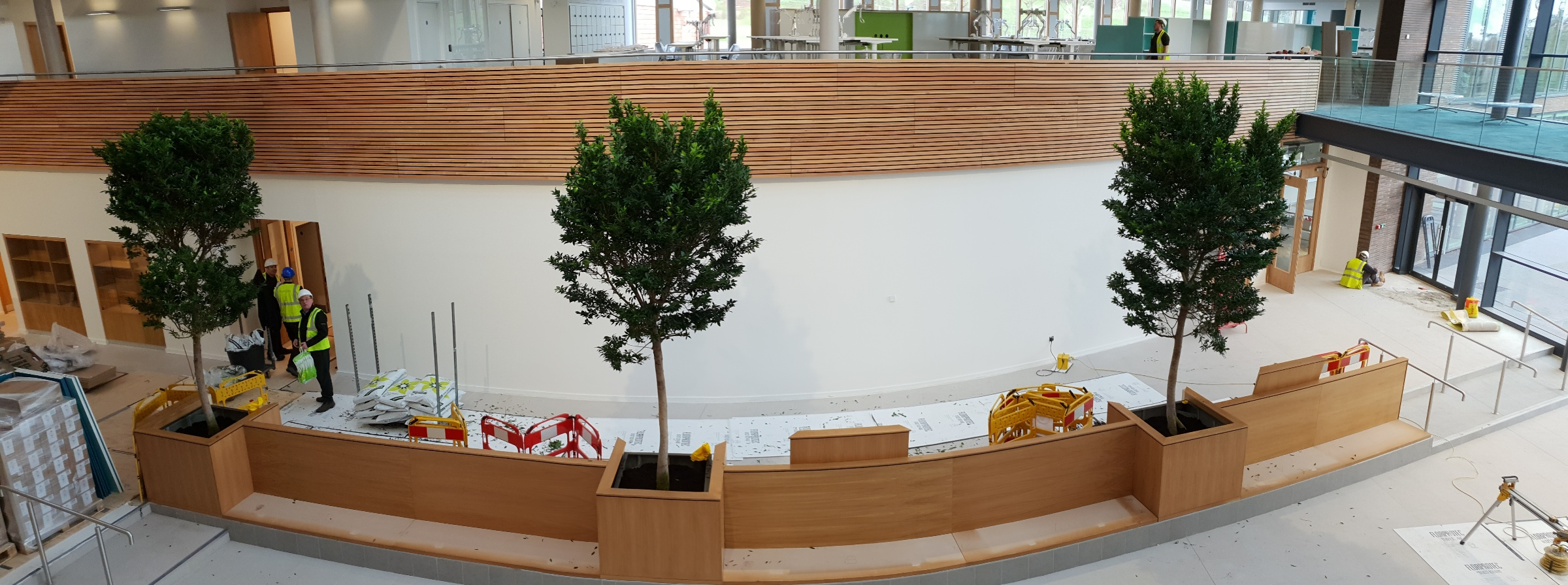 indoor-tree-internal-tree.jpg