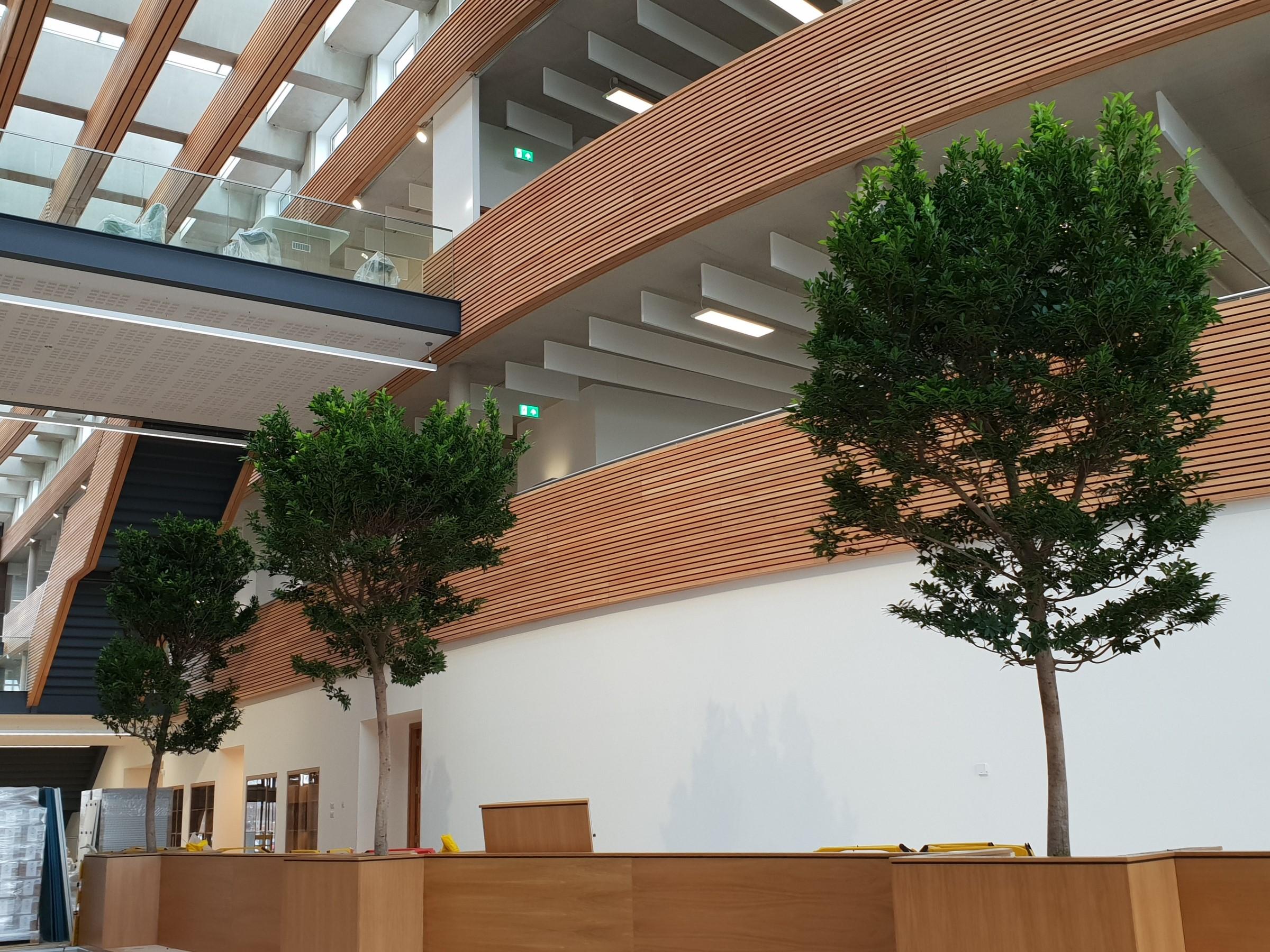 indoor-trees.jpg