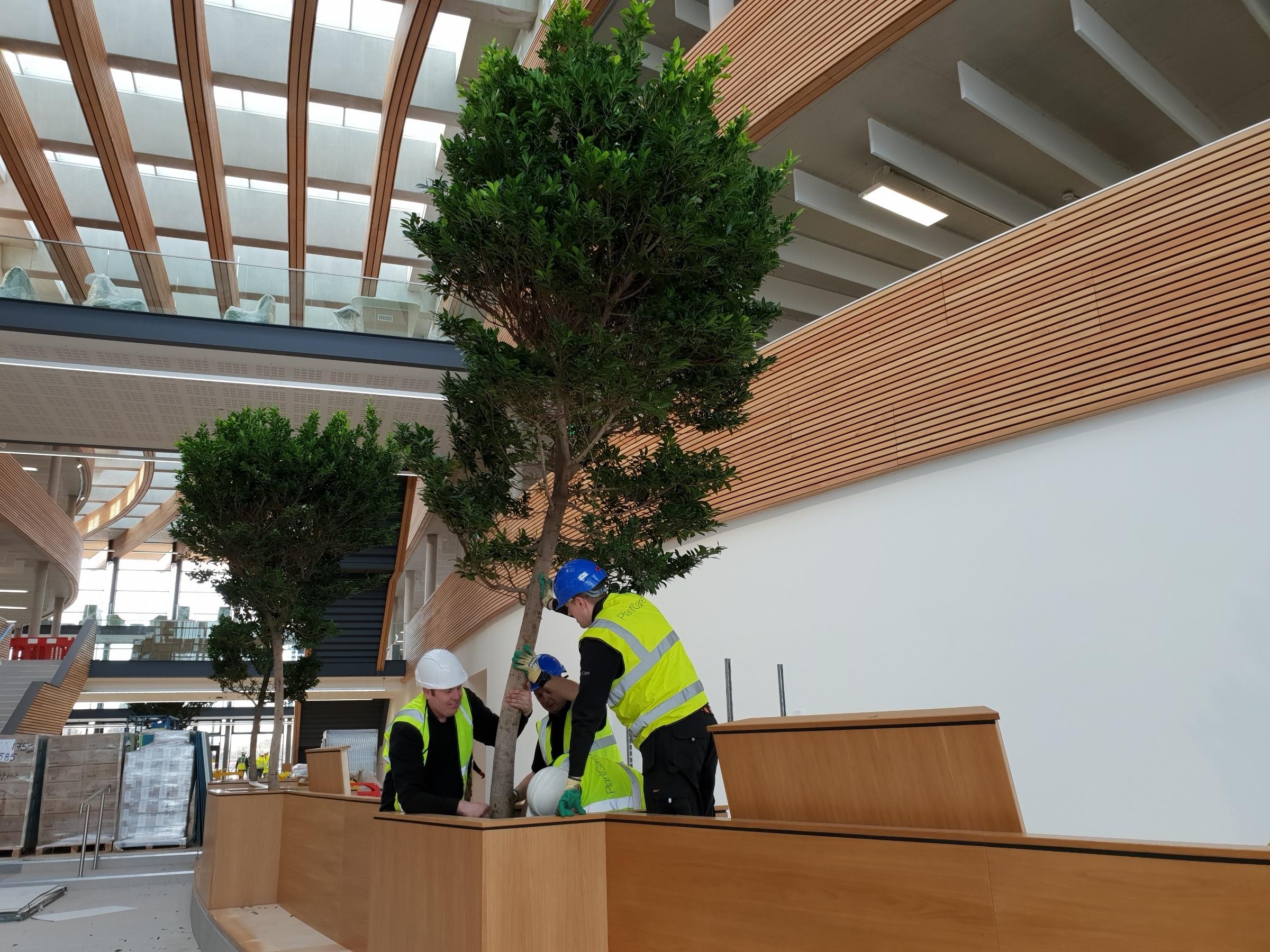 atrium-tree.jpg