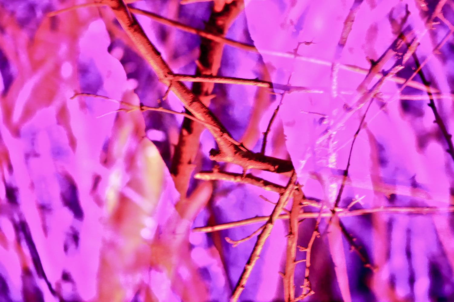 Rachael Sture Photography nature personal work neon nature
