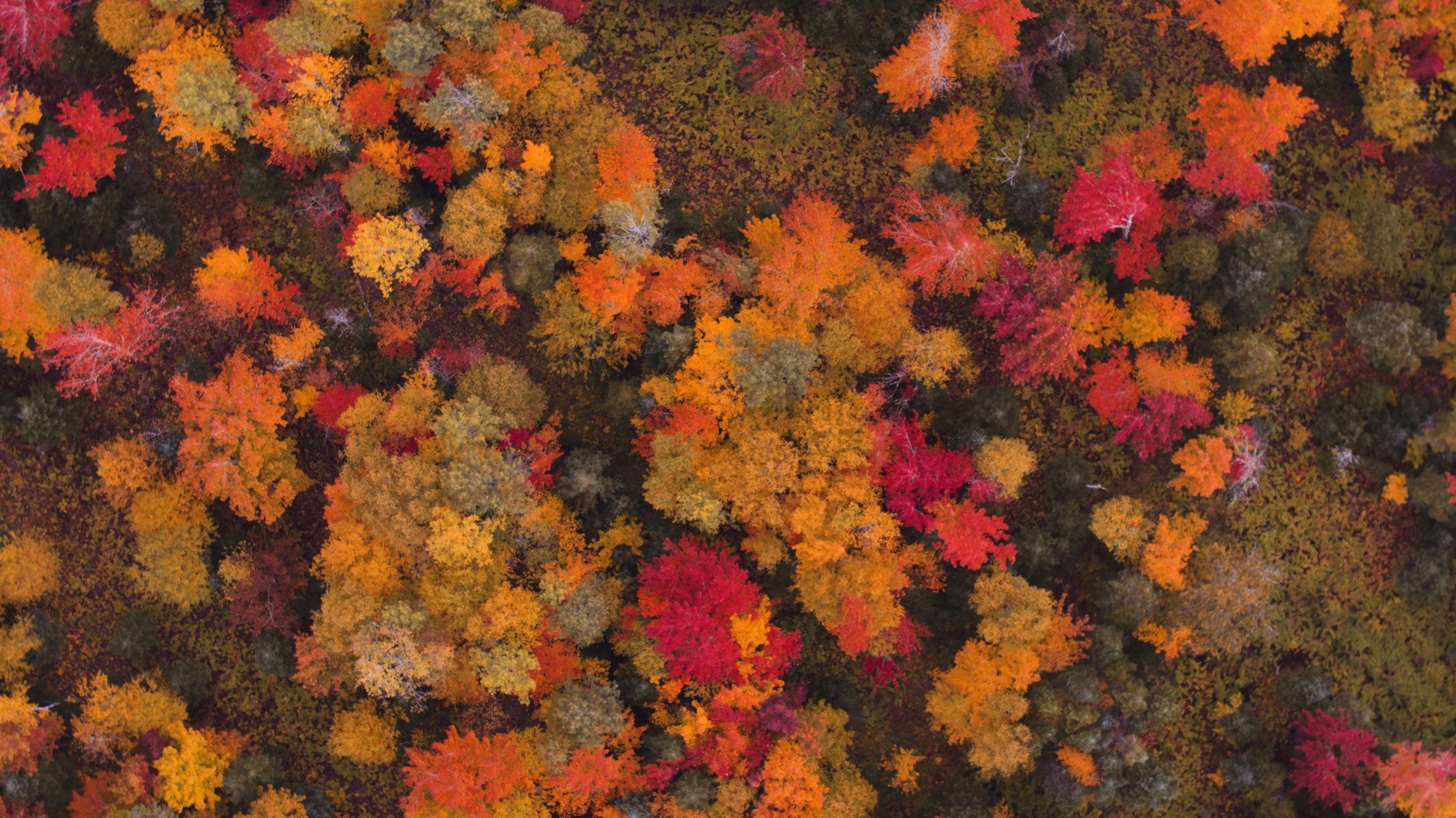 Maine Fall Colors.jpg