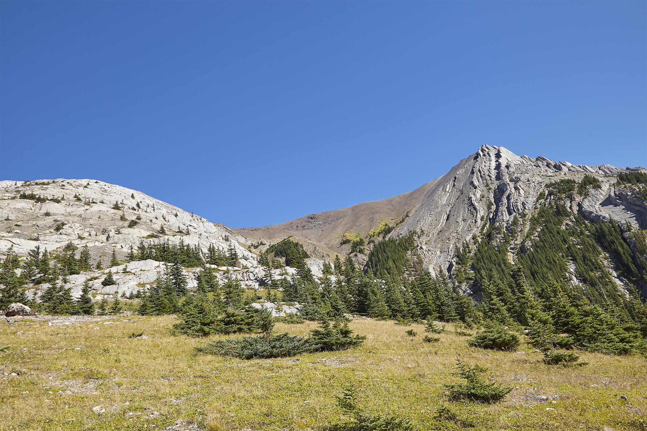 Opal Ridge from near the tree line.