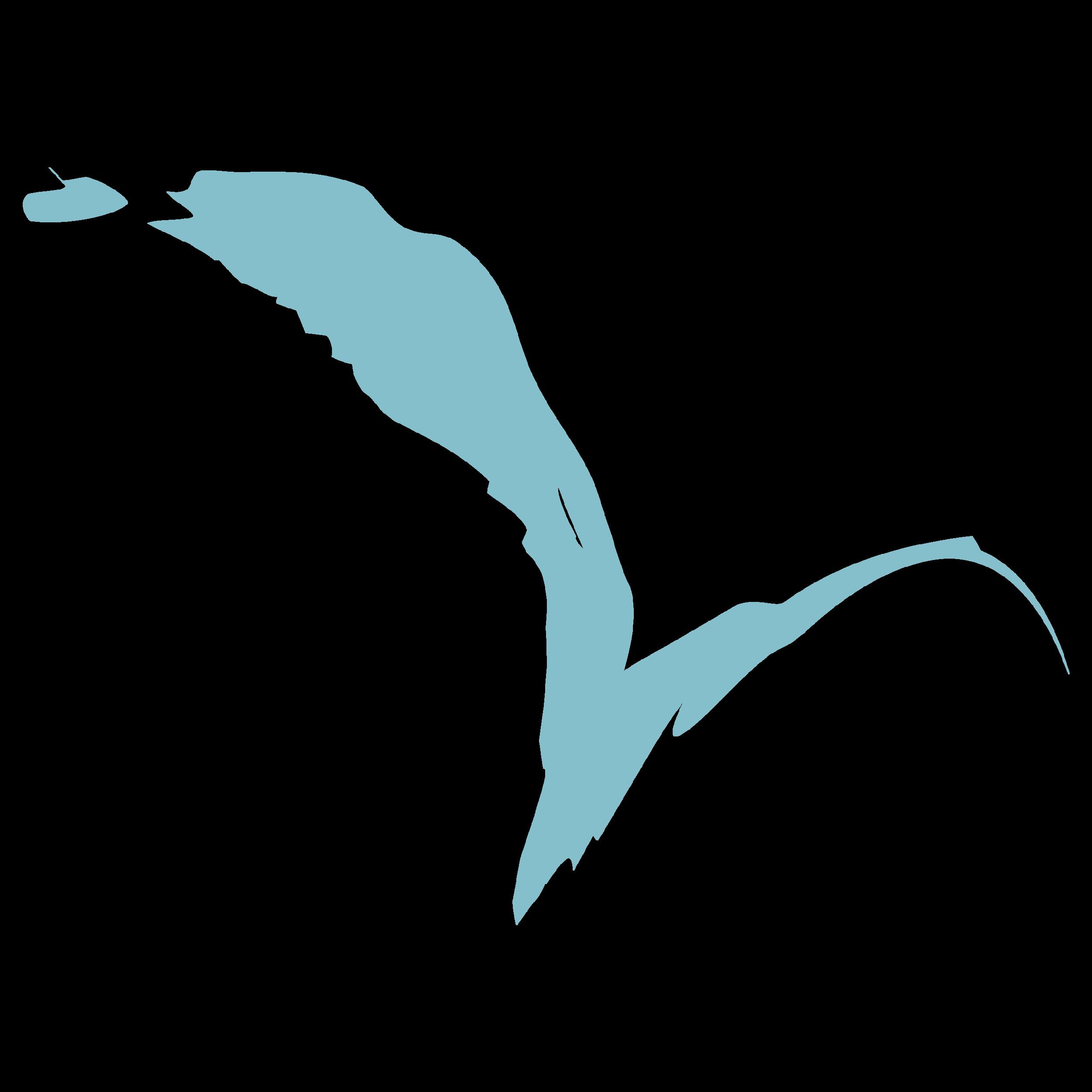 Bird Teachers Edition.png