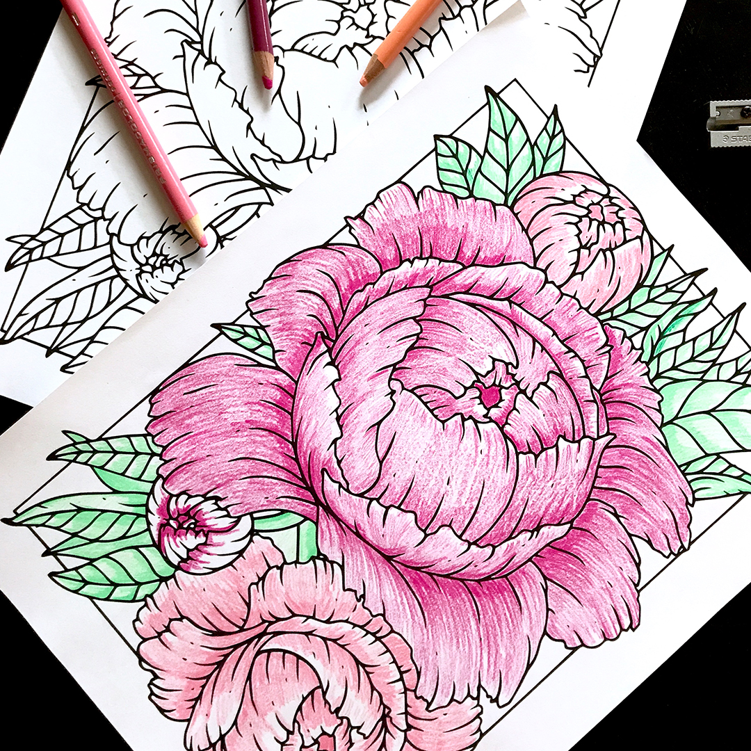 Free Coloring Page | Peonies - Hand Illustrated  by Philip Boelter
