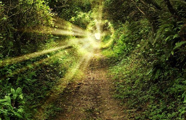 clarity in woods.jpg