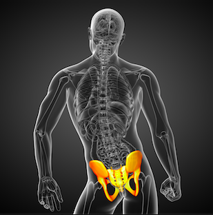 The Sacroiliac joint to be exercised