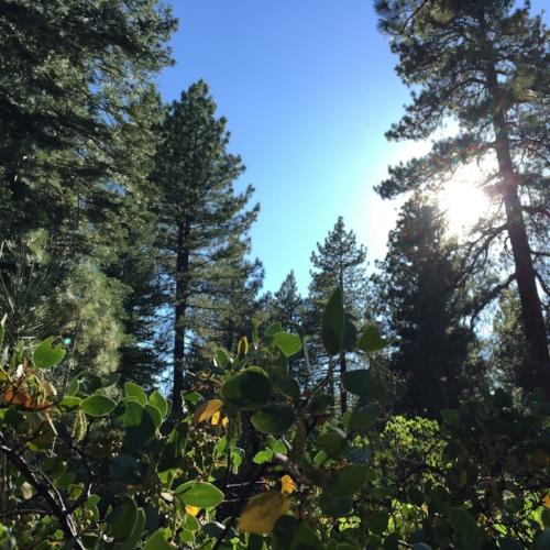 Sierra Trac Meadow 1 Web.jpg
