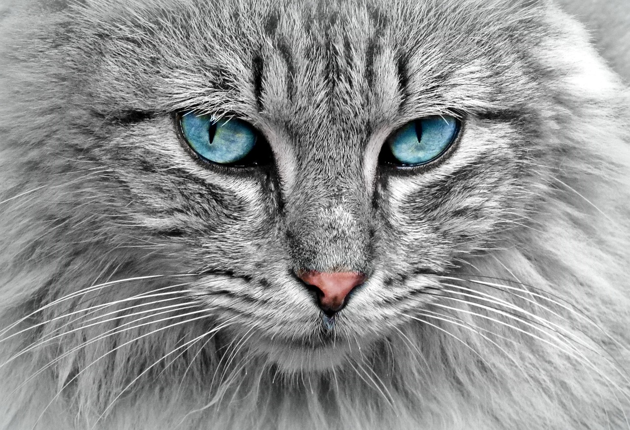 cat-1045782_1280.jpg