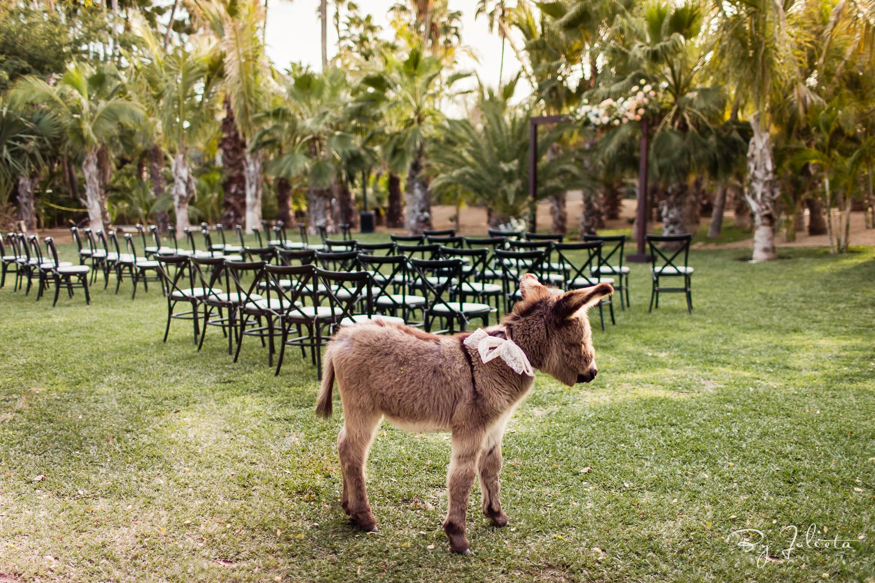 Acre Wedding Cabo. W+L. Julieta Amezcua Photography. (16 of 547).jpg