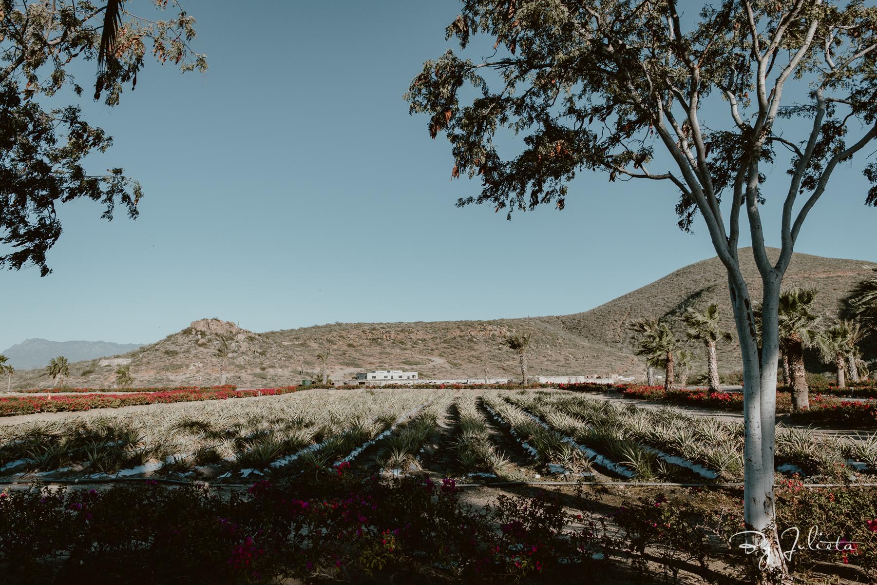 Hotel San Cristobal Baja Wedding. J+M. Julieta Amezcua Photography. (3 of 695).jpg