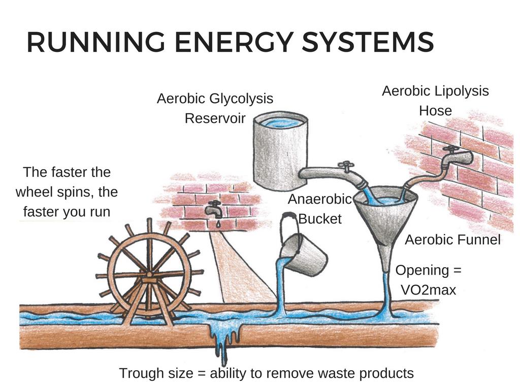 Running Energy Systems, aerobic, anaerobic, lipolysis, glycolysis