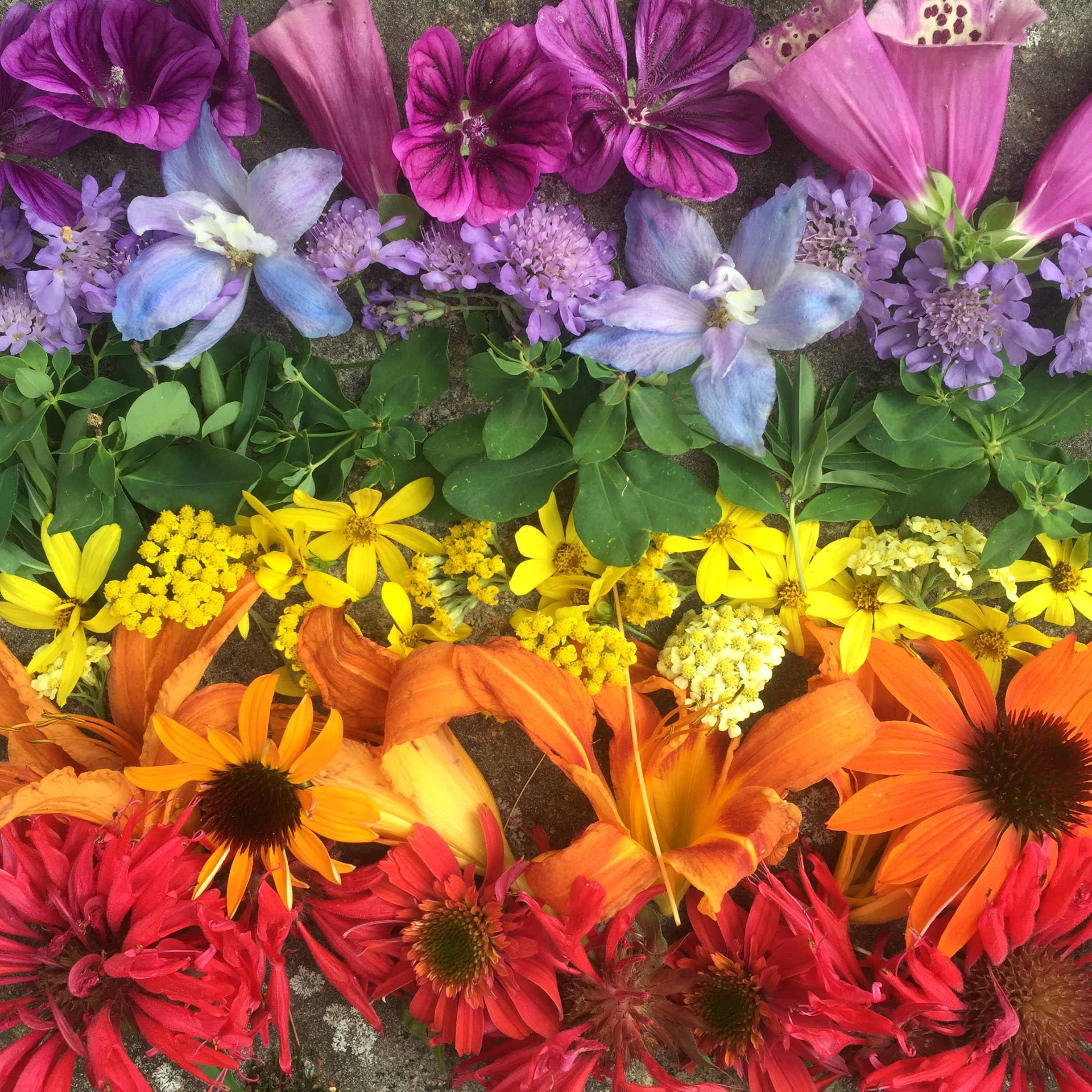 A quick overhead shot from last summer. While, less fancy than I would have liked, this rainbow of blooms was appreciated by many of my followers.