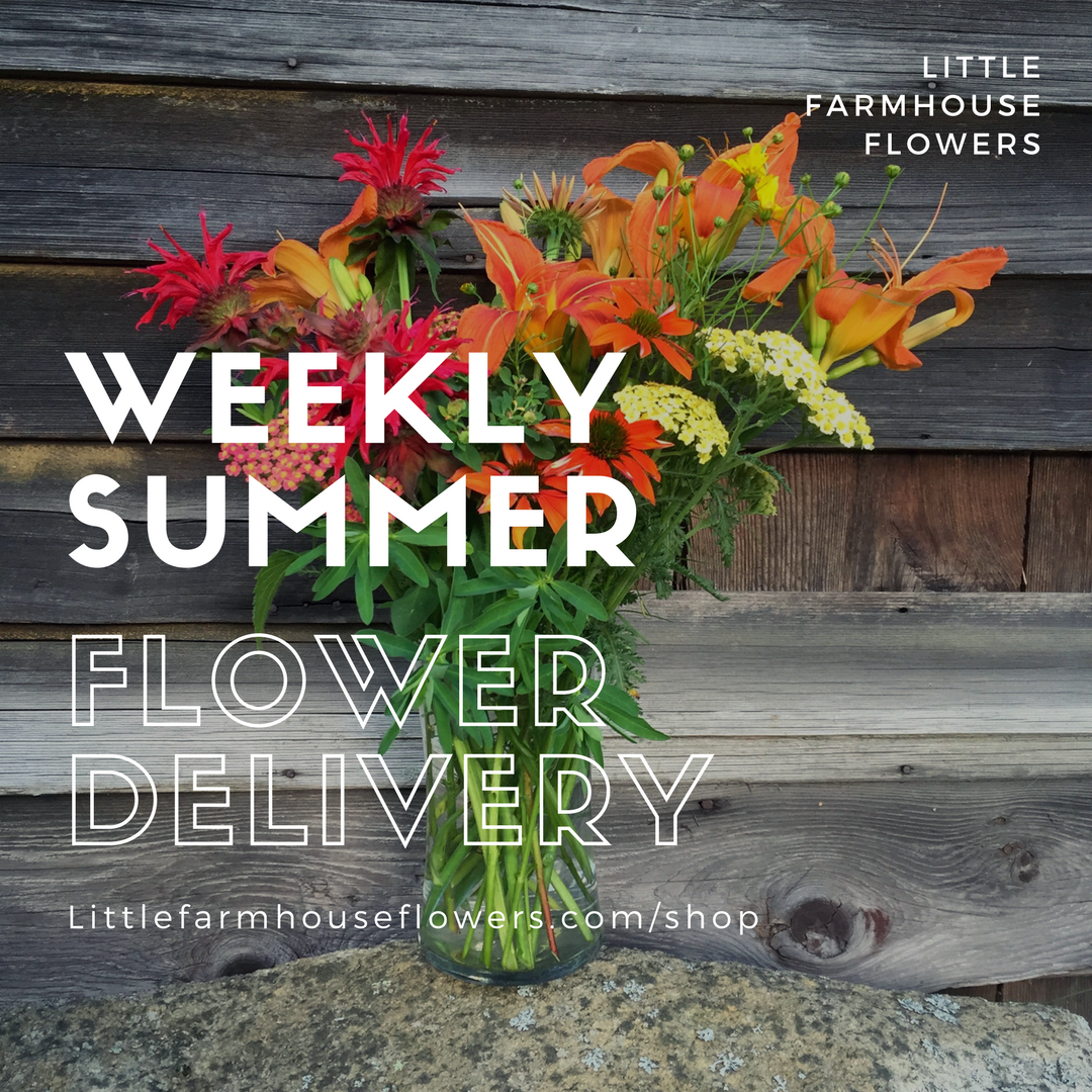 I made this ad for one of our flower CSA options with a Canva template.