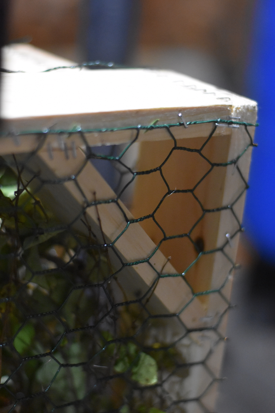 "Close up of chicken wire, natural material ""filling"" and corner bracing pieces"