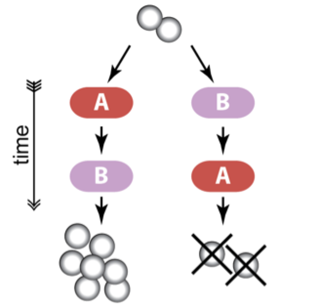 Evolutionary conditioning allows cells to anticipate typical sequential changes