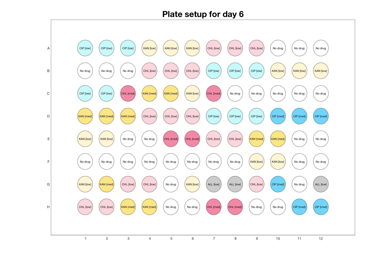 Plate setup for day - 6.jpg