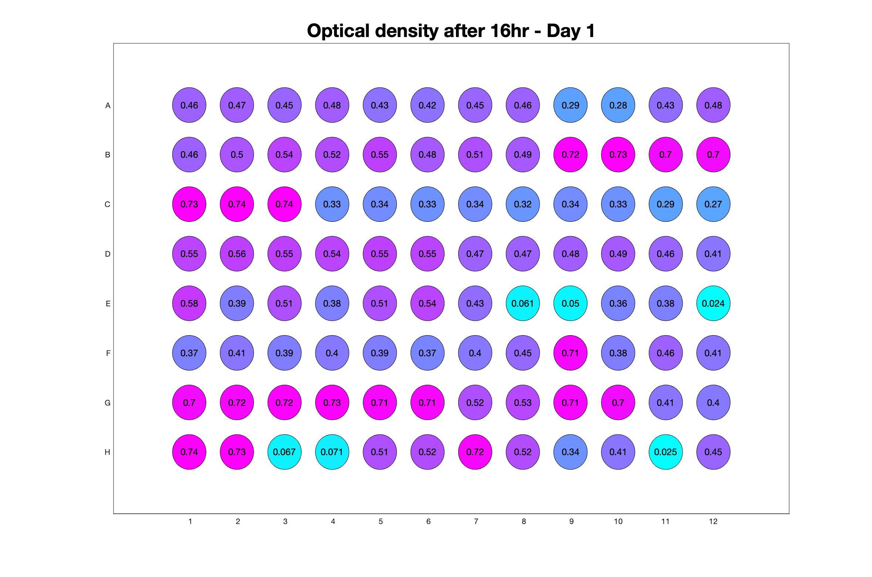 Optical density after 16hr - Day 1.jpg