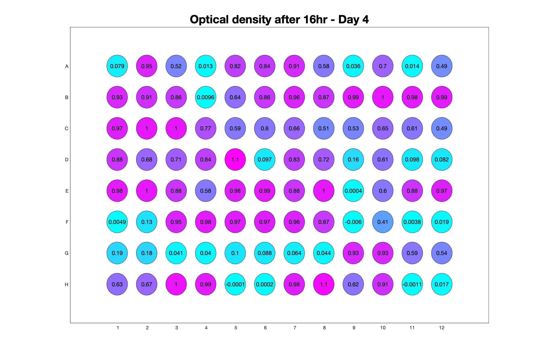 Optical density after 16hr - Day 4.jpg