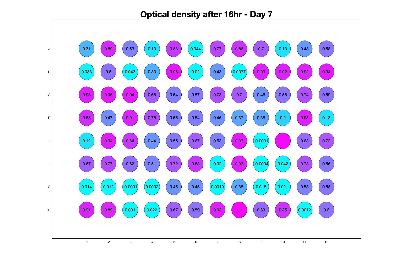 Optical density after 16hr - Day 7.jpg