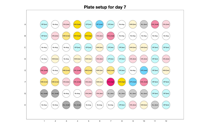 Plate setup for day - 7.jpg