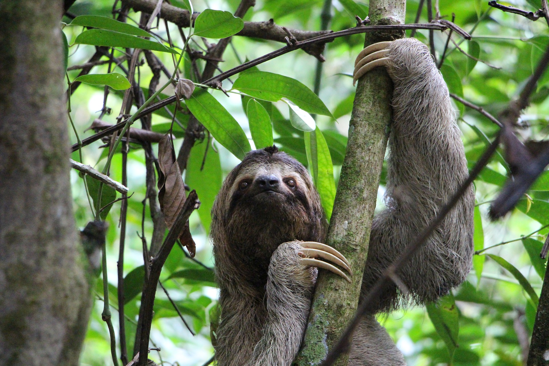 """Yeah, please don't ruin my environment, k thanks."" - Sloth"